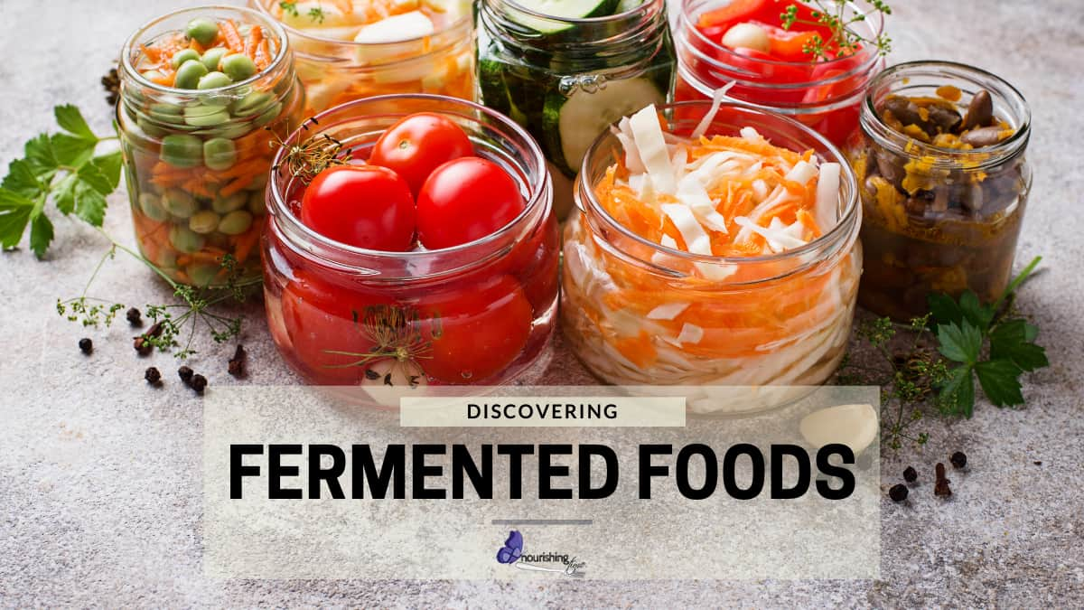 Fermented Food Discovery