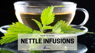Nettle Leaf Infusion
